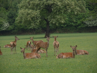 Warnham Deer Park
