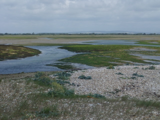 Pagham Harbour