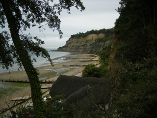 Shanklin Cliffs