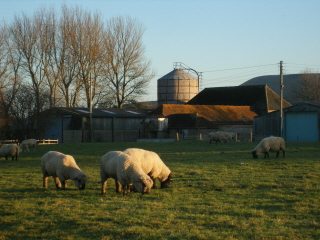 Preston Court Farm